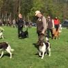 """In Pischelsdorf gehen Jagdhunde in die Schule. Jetzt gab es ein """"Klassentreffen"""""""