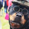 Steampunk auf Steirisch beim Bulldogwirt: Zu Besuch beim abgefahrensten Flohmarkt der Oststeiermark