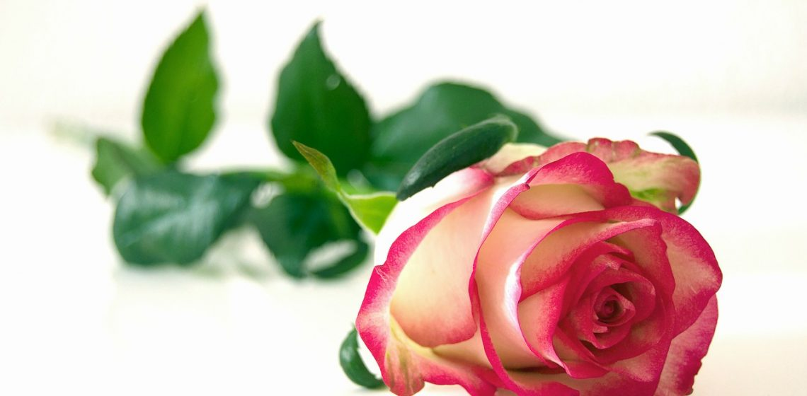 rose,frau,frauentag,weltfrauentag,sinnlos,sinn,ändern,tun